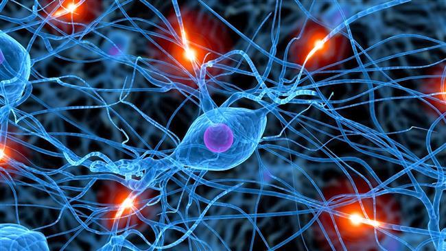 ¿El alcohol destruye las neuronas?